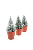 Tiny snow-flecked trees Stock Photography