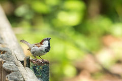 Tiny Sparrow Stock Photos