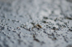 Tiny spider crawling Stock Photography