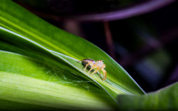 Tiny spider Stock Image