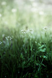 Gentle Spring flowers Royalty Free Stock Images
