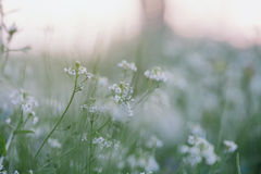 Tiny Spring flowers Stock Image