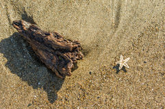 Tiny starfish and driftwood on the beach Royalty Free Stock Images