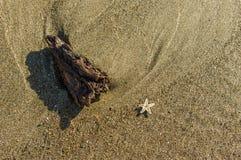 Tiny starfish and driftwood on the beach Stock Photos