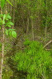 Tiny stream in the dense forest Royalty Free Stock Photography