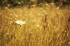 Tiny summer flower. Abstract grass Royalty Free Stock Photography