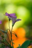 Tiny summer flower with plenty Stock Photo
