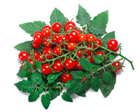 Tiny tomatoes Solanum pimpinellifolium, paths, top view. Currant sweet pea tomatoes Solanum pimpinellifolium with leaves. Clipping paths, shadow separated, top Royalty Free Stock Photography
