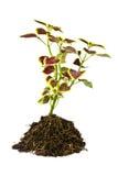 Tiny Tree Stock Photo