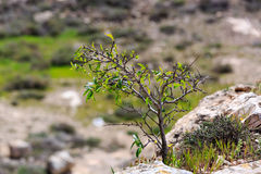 Tiny tree growing in the grass Royalty Free Stock Images