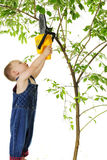 Tiny Tree Trimmer Stock Photography