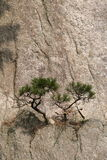 Tiny Trees on a Cliffside Stock Image