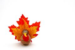 Tiny turkey for Thanksgiving Stock Photography