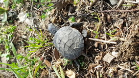 Tiny Turtle Textures Royalty Free Stock Image