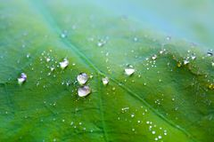 Tiny water droplets on leaf background Royalty Free Stock Photos