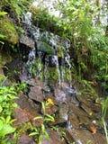 Tiny waterfall in Amazon Jungle Iguazu town royalty free stock photography