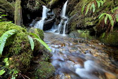 Tiny Waterfall in a Forest Stream Royalty Free Stock Image