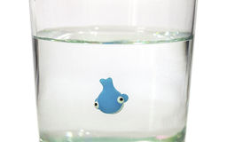 Tiny whale swimming in glass of water royalty free stock images