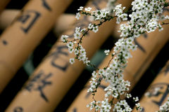 Tiny white flowers in Spring 春天的白色小花 royalty free stock image