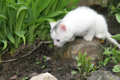 Tiny white kitten looking around stock images