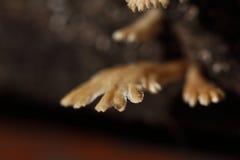 Tiny White Mushroom in rain season on moisture old wood on floor. Macro photography of mushroom, selective focus, blur some part Royalty Free Stock Image