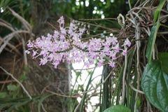 Tiny wild orchid Royalty Free Stock Photos