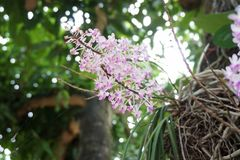 Tiny wild orchid Royalty Free Stock Images