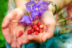 Tiny wild strawberries and bellflowers Stock Photography
