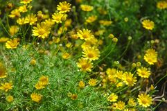 Tiny yellow flower in green field stock photo