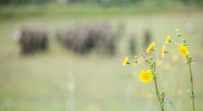 Tiny yellow flowers in meadow with blurred nature and soldiers background. Copyspace, close up view. Stock Photo