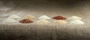 Tio högar av ris av olika variationer royaltyfri fotografi