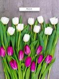 Tio vita och tio rosa tulpan Royaltyfri Foto