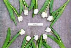 Tio vita tulpan vid en ferie av våren Fotografering för Bildbyråer