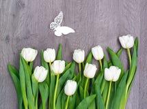 Tio vita tulpan vid ferie av våren med den härliga fjärilen Arkivfoto