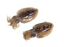 tioarmad bläckfisk Royaltyfria Bilder
