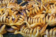 Tioarmad bläckfiskstek- och tioarmad bläckfisktentakel Arkivbilder
