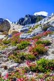 Tioga通行证,优胜美地国家公园,内华达山,美国 库存图片