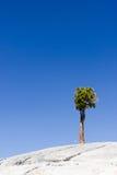 Tioga droga, Joshua drzewo, Kalifornia, usa Fotografia Royalty Free