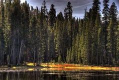 Tioga-Durchlauf-Bäume lizenzfreies stockbild