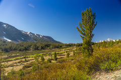 Tioga Pass Royalty Free Stock Photos