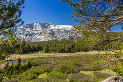 Tioga Pass Royalty Free Stock Images