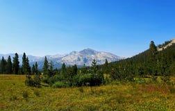 Tioga przepustki łąka i góra krajobraz, Tuolumne łąki, Yosemite obraz royalty free