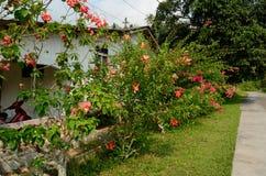 Tioman island Royalty Free Stock Images