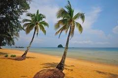 Tioman island, Malaysia. Coconut trees in Tioman island, Malaysia Royalty Free Stock Image