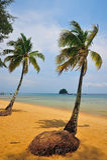 Tioman island, Malaysia. Coconut trees in Tioman island, Malaysia Royalty Free Stock Photos