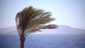 Tip of the palm tree is swaying in the wind, the ocean is stormy. In the background, through the fog of the mountain stock footage