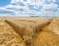 Tip from a partially harvested wheat field Stock Photography