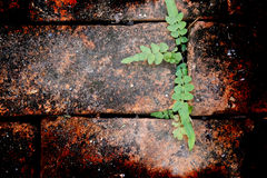 Tip (Selected focus) of center branch of plant on brown bricks a. Nd rust spreads from outside to inside of frame (grunge mode Royalty Free Stock Photo