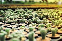 Tipi di varietà di cactus nell'azienda agricola con il fuoco selettivo e blu immagine stock