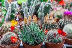 Tipi differenti di cactus immagine stock